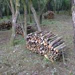 Very neat log piles