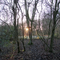 oaks-campsite-4